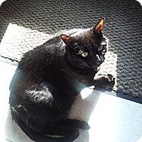 Adopt A Pet :: Missy - Lenexa, KS