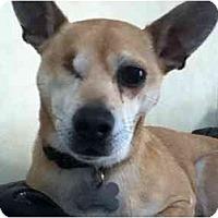 Adopt A Pet :: Rocky ( Rock Star) - Johnsburg, IL