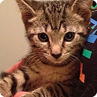 Adopt A Pet :: Blaze - Troy, OH