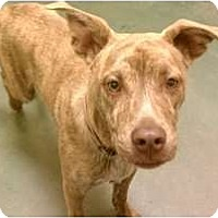 Adopt A Pet :: Bisquit - Fresno, CA
