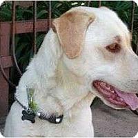 Adopt A Pet :: ABBEY - La Mesa, CA