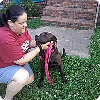 Adopt A Pet :: Bailey - Hollis, ME