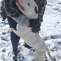 Adopt A Pet :: #481-14 ADOPTED! - Zanesville, OH