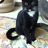 Adopt A Pet :: Hooch - Trevose, PA