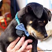 Adopt A Pet :: Monty - Hamburg, PA
