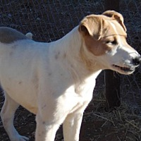 Adopt A Pet :: Lucky - Post, TX
