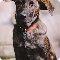 Adopt A Pet :: tarragon - Portland, OR