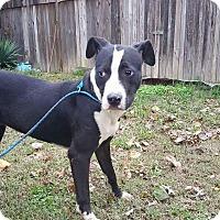 Adopt A Pet :: Hope - New Kensington, PA