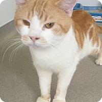 Adopt A Pet :: Barthalamew - Hamburg, NY