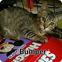 Adopt A Pet :: Bumper - Simi Valley, CA