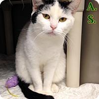 Adopt A Pet :: T-8 - Triadelphia, WV