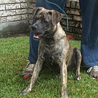 Terrier (Unknown Type, Medium) Mix Dog for adoption in Slidell, Louisiana - Niles