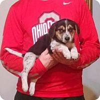 Adopt A Pet :: Buddy - Lakewood, OH
