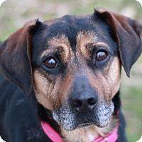 Adopt A Pet :: Jamie - Brattleboro, VT