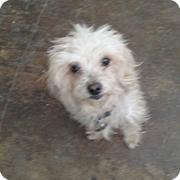 Adopt A Pet :: Pauline - Simi Valley, CA