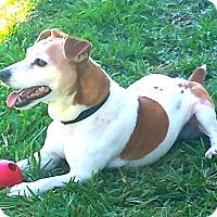 Adopt A Pet :: NATE - wonderful personality! - Terra Ceia, FL