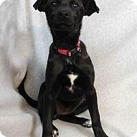 Adopt A Pet :: June - Westminster, CO