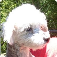 Adopt A Pet :: Nikki - Crump, TN