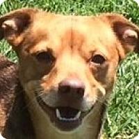 Adopt A Pet :: Hodge - MINNEAPOLIS, KS
