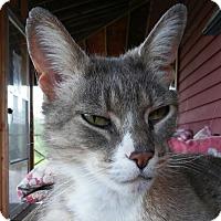 Adopt A Pet :: Charles $10 - Brimfield, MA