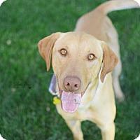 Adopt A Pet :: Gerald - Salt Lake City, UT