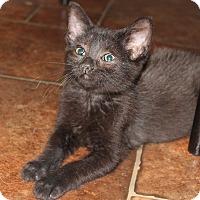 Adopt A Pet :: Melissa - Hopkinsville, KY
