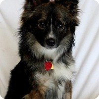 Adopt A Pet :: Ryder - Wichita, KS