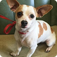 Adopt A Pet :: # 3 STRAY Avail.8/30 - Carrollton, OH