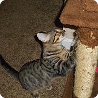Adopt A Pet :: Cassandra - Northfield, OH