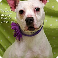 Pit Bull Terrier Mix Dog for adoption in Newnan City, Georgia - Maxine