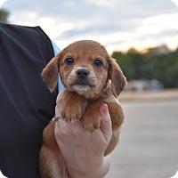 Adopt A Pet :: Val - Groton, MA