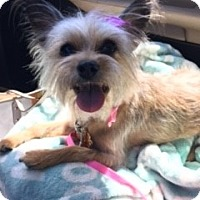 Adopt A Pet :: Willow - Las Vegas, NV