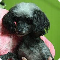Adopt A Pet :: Molly - Joplin, MO