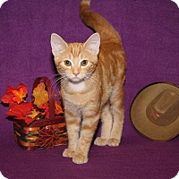 Adopt A Pet :: Lil Red (Neutered) - Marietta, OH