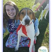 Adopt A Pet :: Mikey - Plainfield, IL