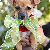 Adopt A Pet :: Joy-ADOPT Me! - Redondo Beach, CA