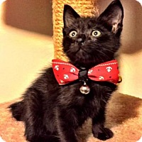 Adopt A Pet :: Kewtie - Austin, TX
