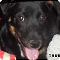 Adopt A Pet :: Thursday - Arenas Valley, NM