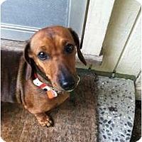 Adopt A Pet :: Skye - San Jose, CA