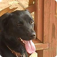 Adopt A Pet :: Oscar - Conyers, GA