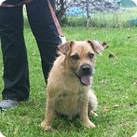 Adopt A Pet :: Bazooka - Crawfordville, FL