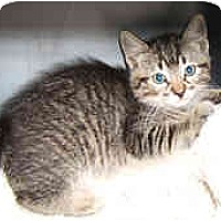 Adopt A Pet :: Bart - Dallas, TX