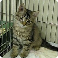 Adopt A Pet :: Daisy - Mission, BC