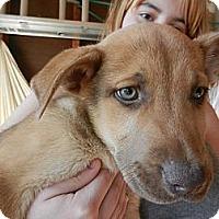Adopt A Pet :: Edward - South Jersey, NJ