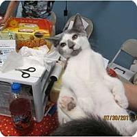 Adopt A Pet :: Jake - Sterling Hgts, MI