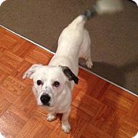 Adopt A Pet :: Bugs - Hamilton, ON