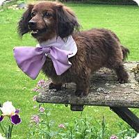 Adopt A Pet :: Linus - Marcellus, MI