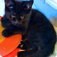 Adopt A Pet :: Jason - Victor, NY