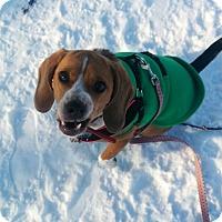 Adopt A Pet :: Newman - Edmonton, AB