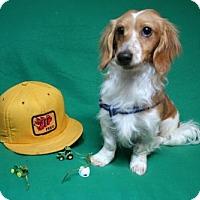 Adopt A Pet :: Blake Shelton - Sioux Falls, SD